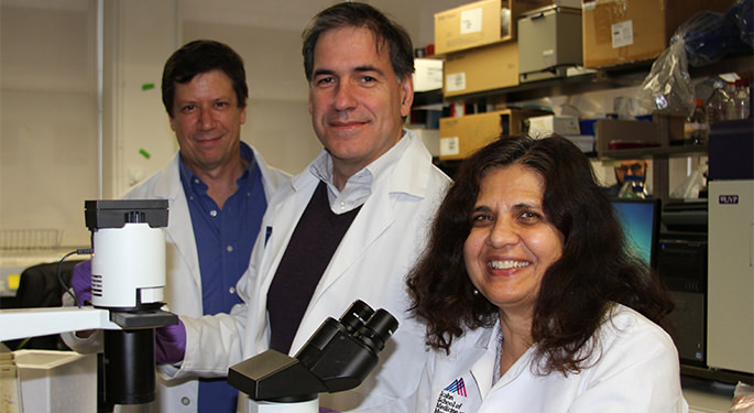 Researchers at the Diabetes, Obesity and Metabolism Institute conduct research on pancreatic beta cell regeneration