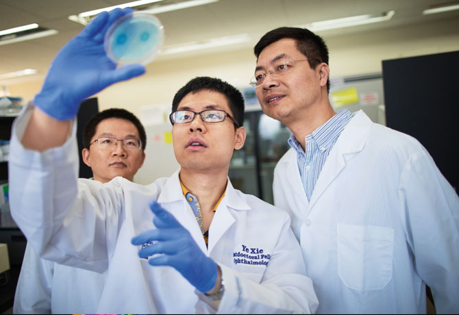 A photo showing Postdoctoral Fellows Xinzheng Guo, PhD and Ye Xie, PhD, with Bo Chen, PhD, examining the bacterial colonies growing on an agarose plate.