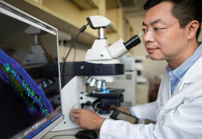 A photo showing Bo Chen, PhD, examining the structural elements of a retinal slice at a cellular level.