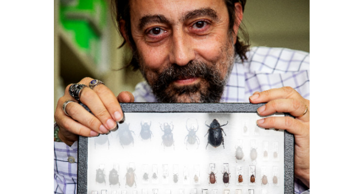 Dr. Garcia-Sastre with some of his bug collection.
