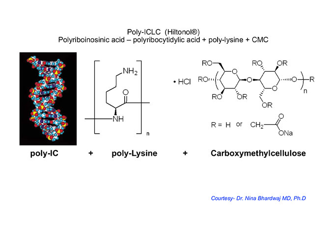 An image of a Poly-ICLC molecule, courtesy of Nina Bhardwaj, MD, PhD.