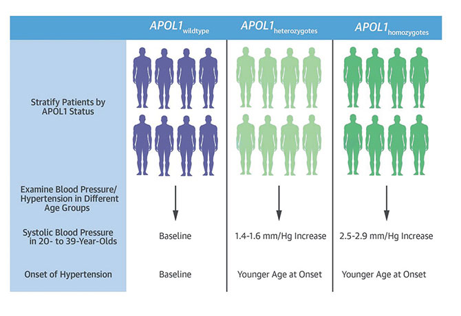 An illustration showing APOL1 Genotypes and Phenotypic Data from EMRs