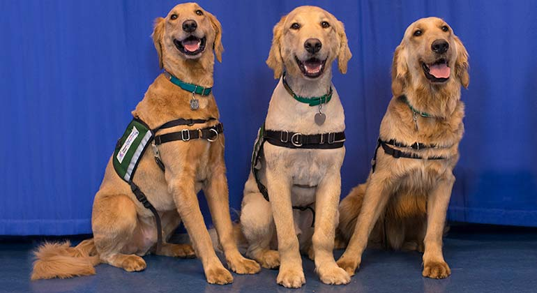 Kravis therapy dogs